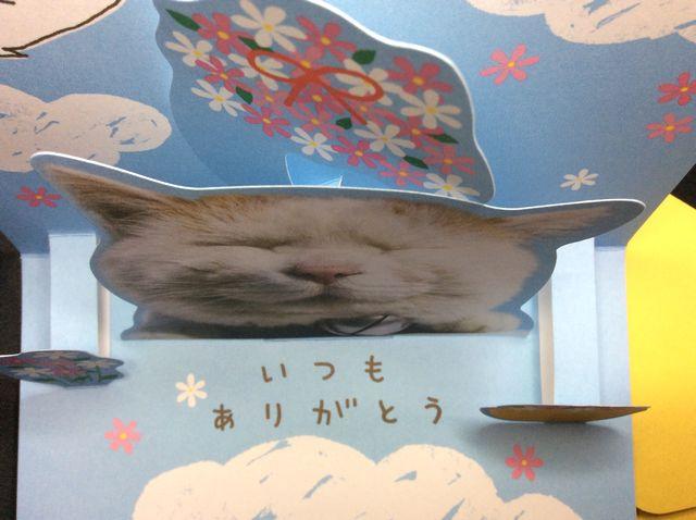 かご猫シロちゃんの飛び出す立体サンキューカードを開いて上から写した画像