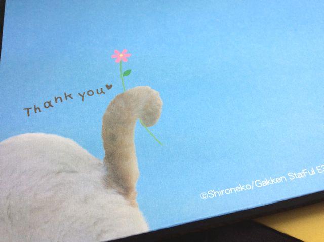 かご猫シロちゃんの飛び出す立体サンキューカードの裏側の画像