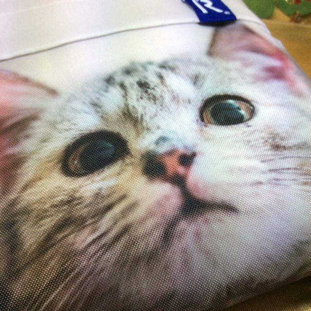 ルートートルーショッパーのトラ猫の顔アップの画像